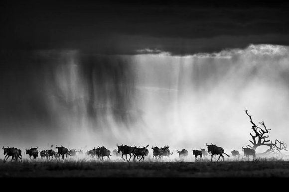 Edinburgh's Watson Gallery Focuses on Renowned Scottish Photographer David Yarrow